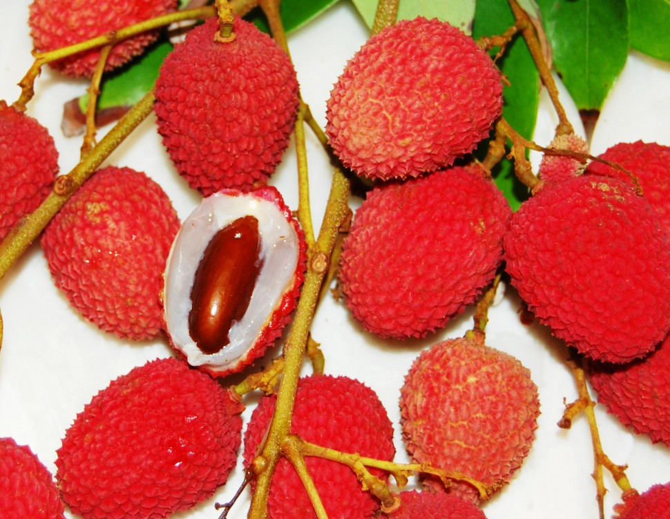 lychee fruit taste what fruit can hamsters eat